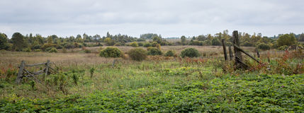 Field on an overcast day Royalty Free Stock Photo
