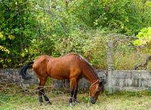 The Field-Paard Royalty-vrije Stock Foto's