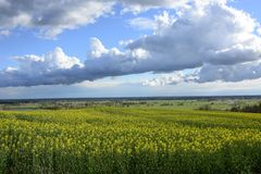 Field painted the color of. Image of landscapes spring and blooming fields Stock Photos