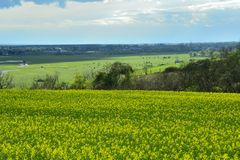 Field painted the color of. Image of landscapes spring and blooming fields Stock Photo