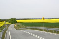 Field painted the color of. Image of landscapes spring and blooming fields Stock Photography