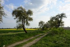 Field painted the color of. Image of landscapes spring and blooming fields royalty free stock images