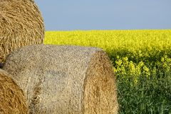 Field painted the color of. Image of landscapes spring and blooming fields Royalty Free Stock Image