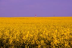 Field painted the color of rape. Image of landscapes spring and blooming rape fields Royalty Free Stock Photo