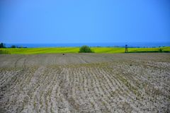 Field painted the color of. Image of landscapes spring and blooming fields Royalty Free Stock Photo