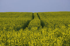 Field painted the color of. Image of landscapes spring and blooming fields Royalty Free Stock Photography