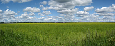 Field panorama Stock Image