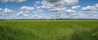 Field panorama stock image