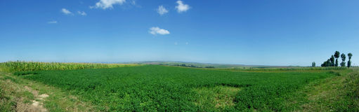 Field panorama Stock Images