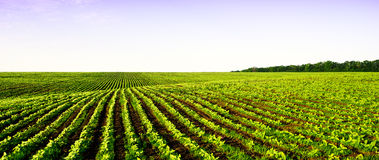 Field panorama farming Stock Photography