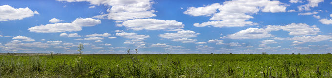 Field panorama. Panorama of a green field with vegetation and the blue sky with white clouds Royalty Free Stock Image