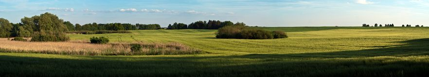 Field panoramic Stock Image