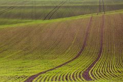 Field passes pattern. Green and brown lines royalty free stock images