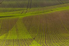 Field passes pattern. Green and brown lines Stock Image