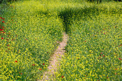 Field path Stock Images