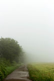 Field path with fog. Forest road with fog after a rain shower Stock Images