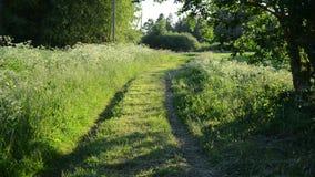 Field path girl stock video