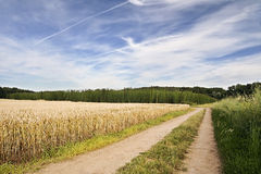 Field path leading to hop garden  in the region Ceske stredohori between the villages Brozany nad Ohri and Doksany near river Ohre Royalty Free Stock Photos