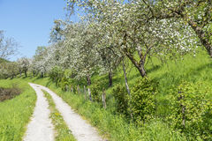 Field path at spring time Royalty Free Stock Images