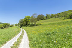 Field path at spring time Stock Photography