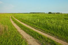 Field with path. Wheat field with tractor trails Royalty Free Stock Photography
