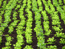 Field Patterns. A beautiful picture of the pattern a field just harvested Royalty Free Stock Photo