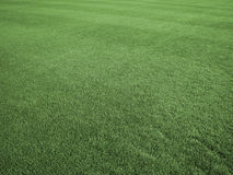 Field of Perfect Turf Royalty Free Stock Photo