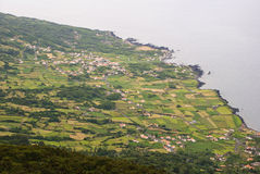 Field, Pico island, Azores Stock Photos