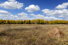 Field and pine forest with cloudy sky in autumn. Grassland and tree in inner mongolia in autumn stock photography