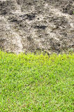 Field and plant field vertical Royalty Free Stock Image