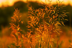 Field plant lit by the sun Royalty Free Stock Image