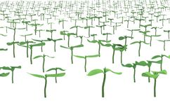 Field with planted sprouts 3d illustration Royalty Free Stock Photo