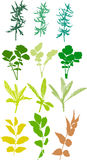 Field  plants, herbs, leaves - vector, traced. Field  plants, herbs, leaves, traced, colors. Isolated Stock Photography