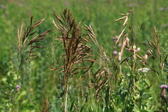 Field plants Royalty Free Stock Photography