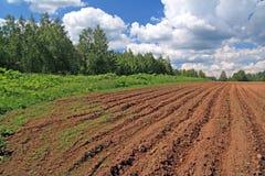 field plogen Arkivbild