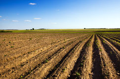 Field is plowed Stock Images