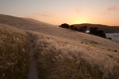 Field in Point Reyes Royalty Free Stock Photos