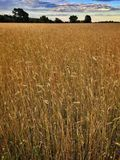 Field in Poland Stock Photography