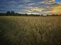 Field in Poland Stock Images