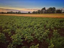 Field in Poland Royalty Free Stock Photos
