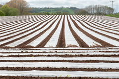 Field of Polytunnels Royalty Free Stock Photos