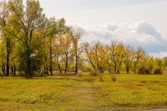 Field and poplar grove Stock Photography