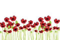 Field of poppies. Over white background Royalty Free Stock Photo