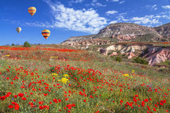 Field Poppies Balloons stock photography