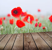 Field of poppies and empty wooden deck table Royalty Free Stock Images