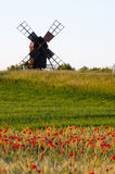Field of poppies in front of an old windmill Royalty Free Stock Photography
