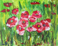 Field poppies in green. Nature Royalty Free Stock Photography