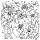 Field poppies. Spring Pattern. For adult coloring book in zenart style Royalty Free Stock Photo