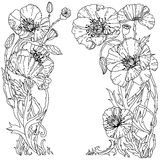 Field poppies. Spring Pattern. For adult coloring book in zenart style. Hand-drawn, retro, doodle, vector, uncoloured. The best for your design, textiles Stock Photography