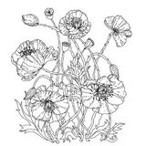 Field poppies. Spring Pattern. For adult coloring book in zenart style. Hand-drawn, retro, doodle, vector, uncoloured. The best for your design, textiles Stock Photos